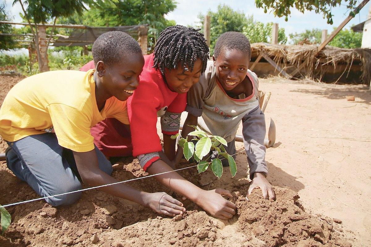 development acitivities africa humana